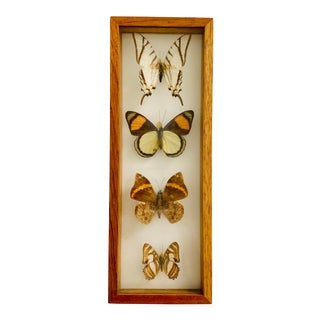 Framed Mounted Butterflies #1 For Sale