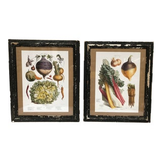 Vintage French Botanical Prints in Rustic Wood Frames - a Pair