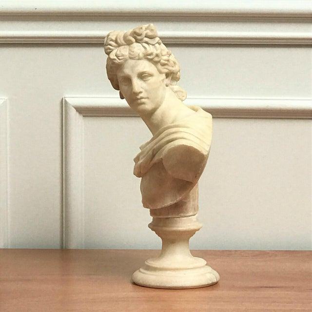 Grand Tour 19th Century Italian Grand Tour Souvenir Bust of the Apollo Belvedere For Sale - Image 3 of 13