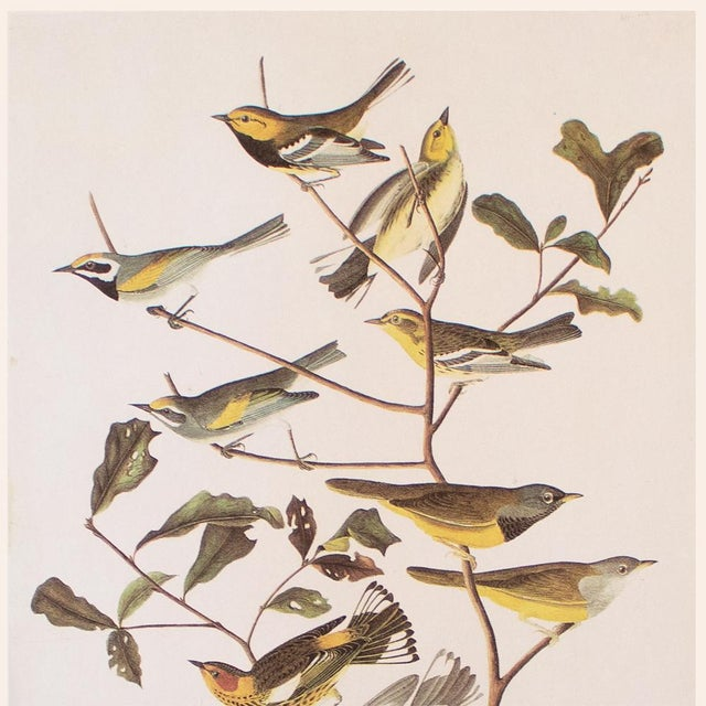 Farmhouse American Warblers by John James Audubon, Vintage Cottage Style Print For Sale - Image 3 of 8
