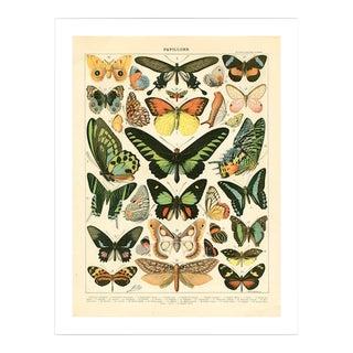 Antique Papillons Archival Print For Sale