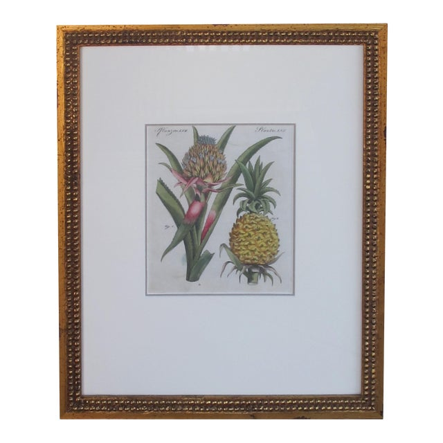 A Well-Rendered French 18th Century Hand-Colored Pineapple Engraving For Sale
