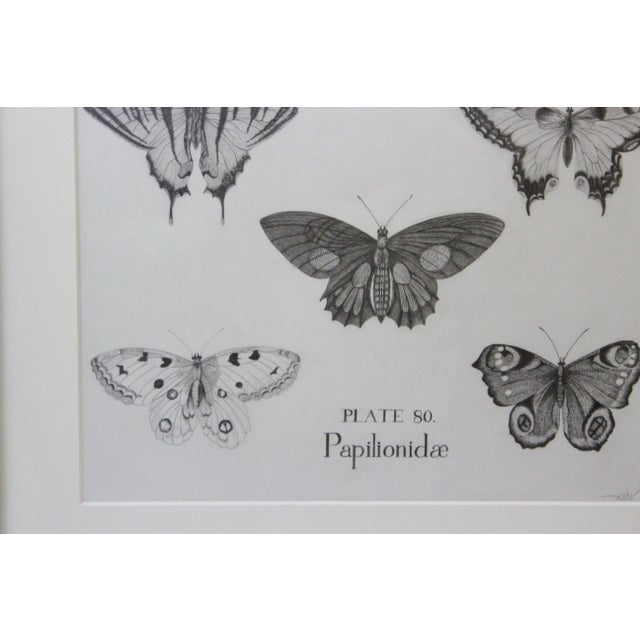 Black and White Butterflies Sketch For Sale - Image 9 of 10