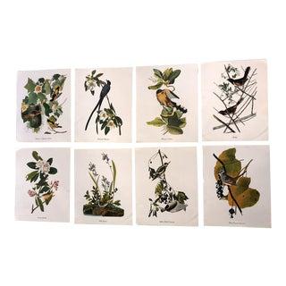 1970s Vintage Authentic John James Audubon Vintage Birds & Botanical Prints – Set of 8 For Sale