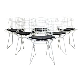 Contemporary Modern Set of 6 Side Wire Chairs by Harry Bertoia for Knoll For Sale