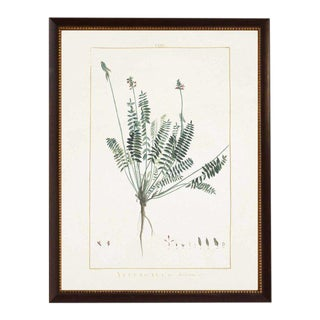 Astragalus Framed Print For Sale