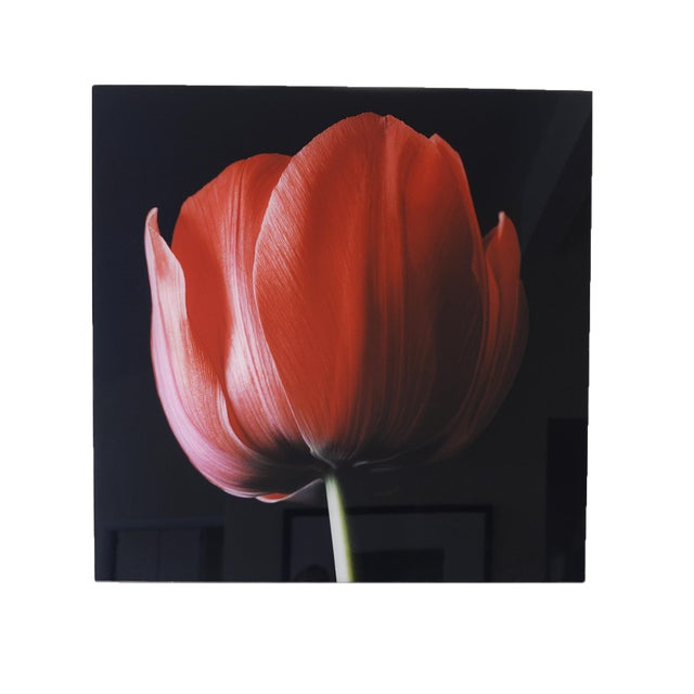 """Red Tulip on Black"" Photograph - Image 1 of 6"