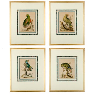 Antique Parrot Engravings by George Edwards - - Set of4