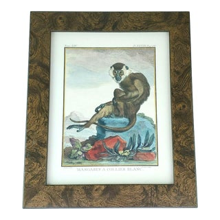 Mangabey a Collier Blanc Monkey Book Plate Art For Sale