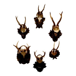 Collection of Five Black Forest Roe Mounts on Carved Wood Plaques For Sale