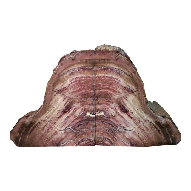 Large Petrified Wood Bookends - a Pair - Image 1 of 11