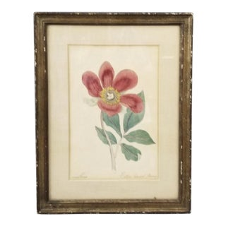 19th Century Hand Painted Wild Peony Botanical Watercolor Painting For Sale