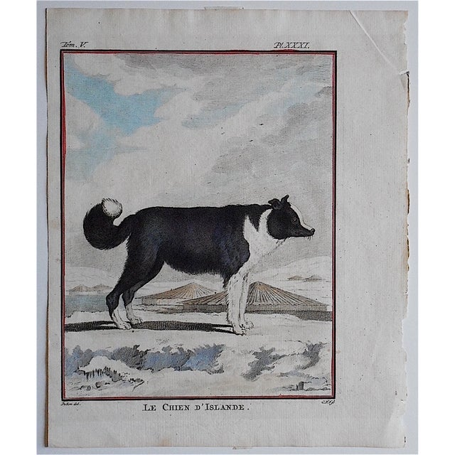 "This hand colored engraving depicts an ""Iceland Dog"". It was printed c.1834 in England on handmade ""laid"" paper. Printed..."