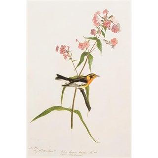 "1966 ""Blackburnian Warbler"" Lithograph Print by Audubon For Sale"