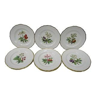 Spode Bone China Gold Trimmed Fruit Blossom English Dinner Plates - Set of 12