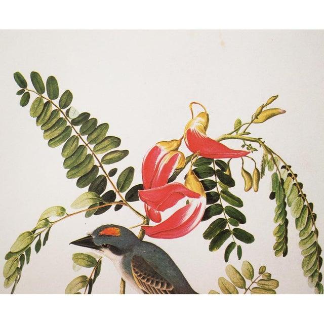 John James Audubon 1966 Gray Kingbird by John James Audubon For Sale - Image 4 of 10