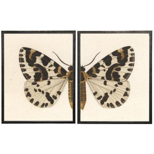 """Boho Chic Split White, Black, and Brown Butterfly - 46"""" X 29"""" For Sale - Image 3 of 3"""