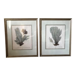 Antique Italian Book Illustrations - a Pair For Sale