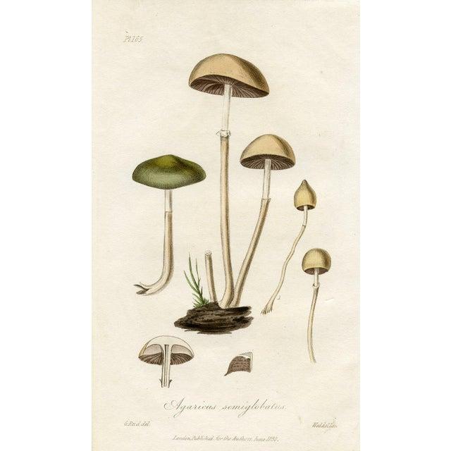 1830 Antique Mushroom Engraving - Image 1 of 3