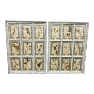 Pair of Italian Herbarium Botanical Wall Pictures For Sale