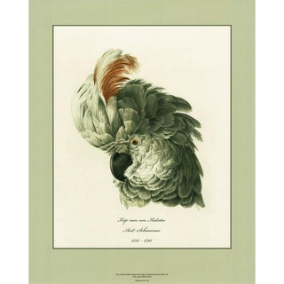 1750s Aert Schouman Cockatoo Head Study Large Print N2 For Sale