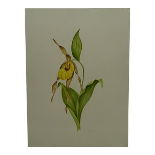 """""""Orchid: Lady's Slipper"""" Original Painting on Paper"""