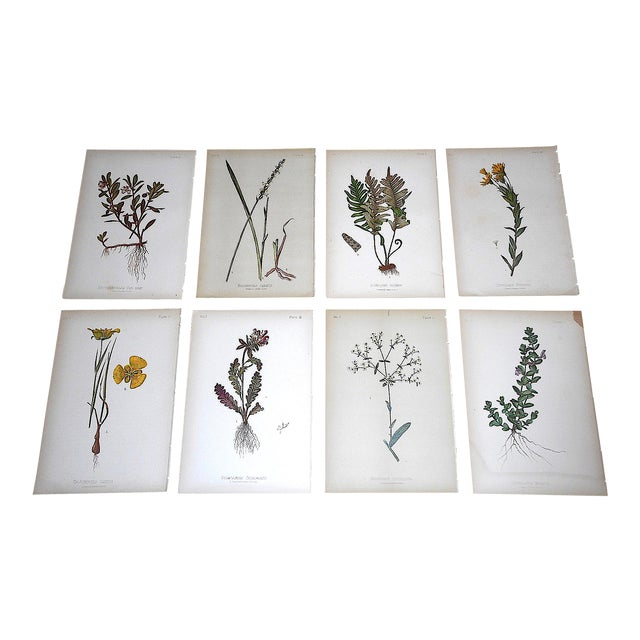 Antique 19th Century Botanical Lithographs - Set of 8 For Sale