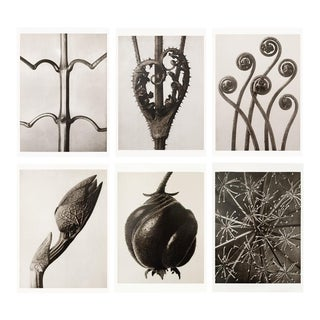 1995 Karl Blossfeldt Original Posters Set of 6 For Sale