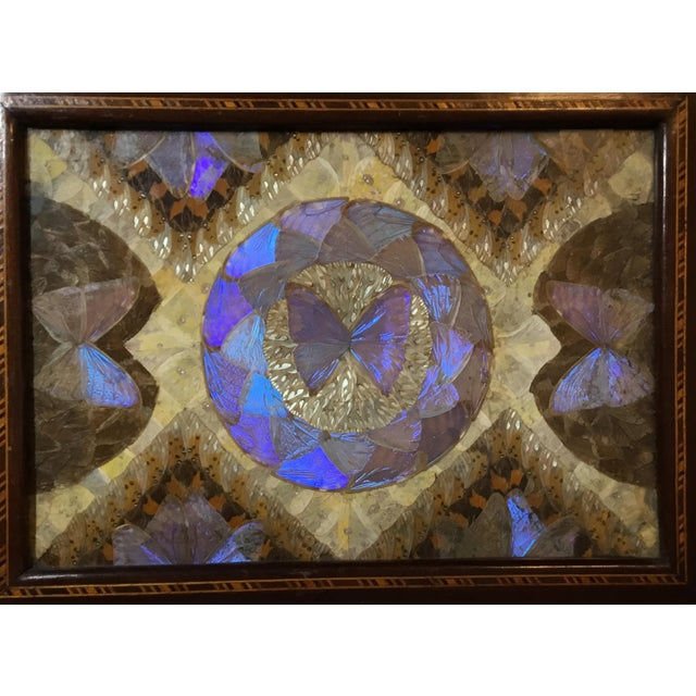 Beautiful tray made of jacaranda wood with inlay, exceptional pattern made of real butterfly wings all over, glass top lay...