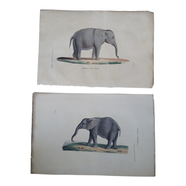 1829 Hand Painted Elephant Engravings - Image 1 of 6