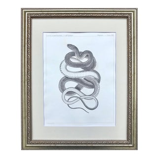 19th Century American Antique Lithograph of a Snake For Sale
