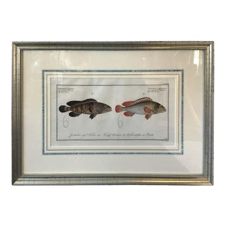 1860s German Fish Print in Silver Leaf Frame For Sale