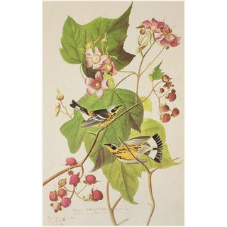 Black and Yellow Warbler by John J. Audubon, Vintage Cottage Print For Sale
