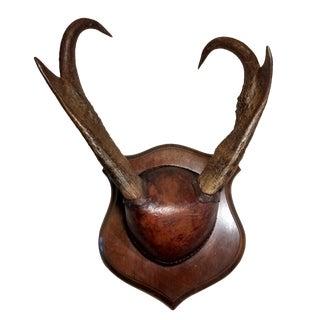 Pronghorn Antelope Horns Taxidermy Wall Décor