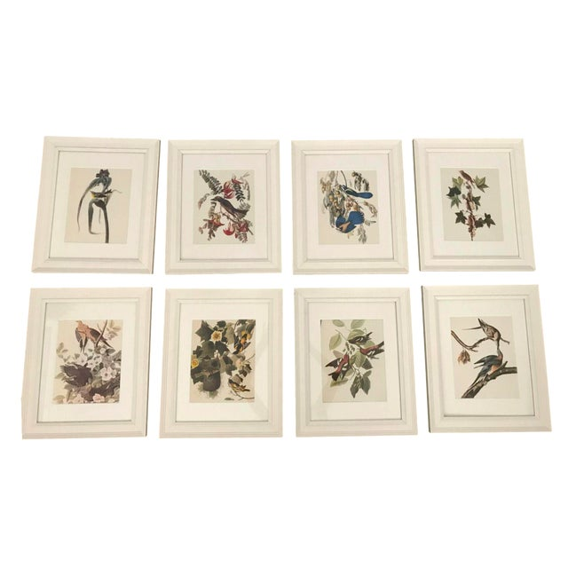 Framed Vintage Bird Prints - Set of 8 - Image 1 of 11
