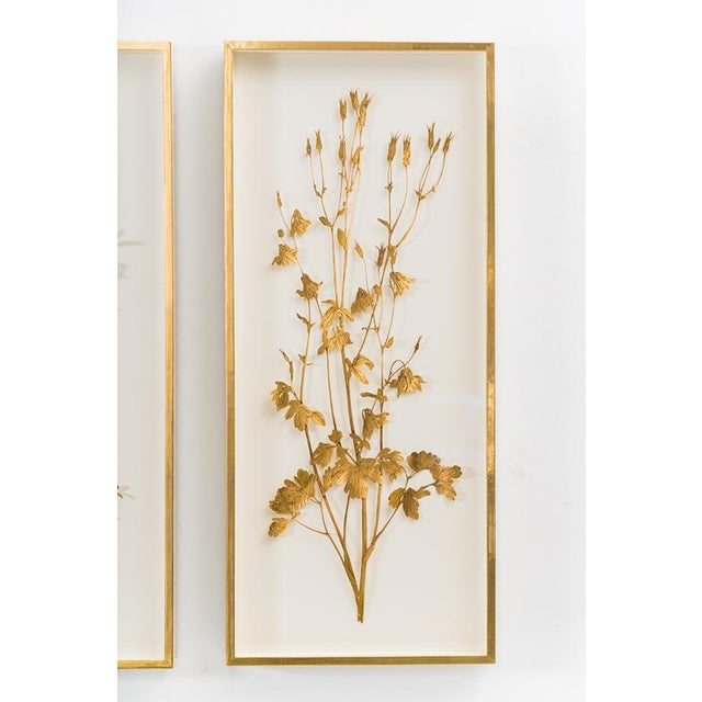 Contemporary Sophie Coryndon, Illuminated Herbarium Triptych, Uk For Sale - Image 3 of 9