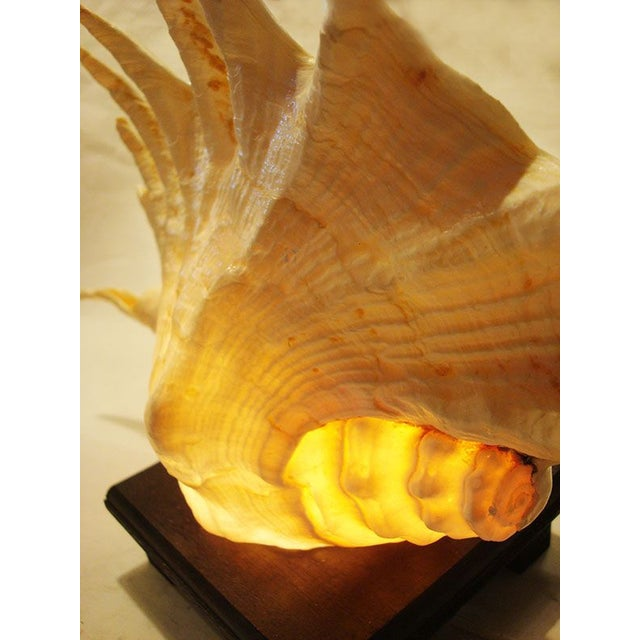 Large Spiny Shell Lamp - Image 3 of 6