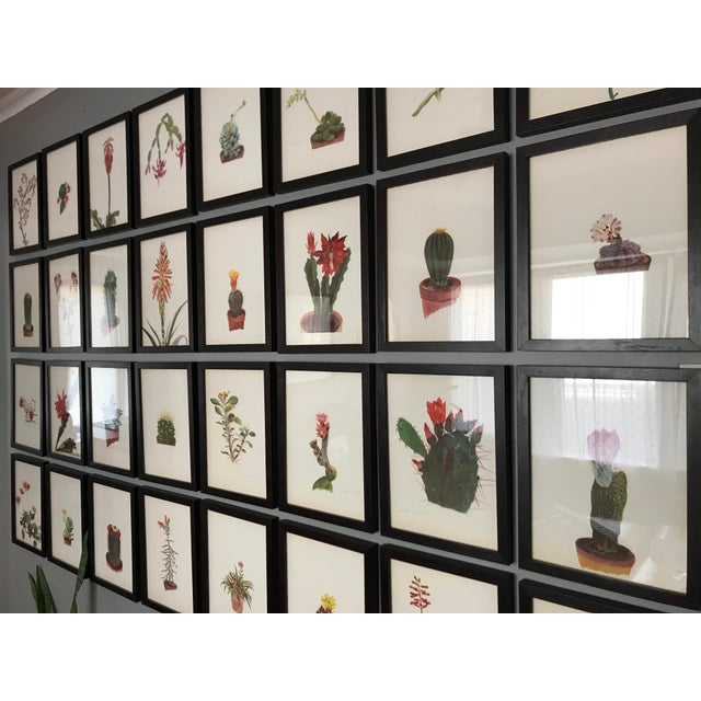Framed Rock Plants - Set of 32 For Sale - Image 4 of 11