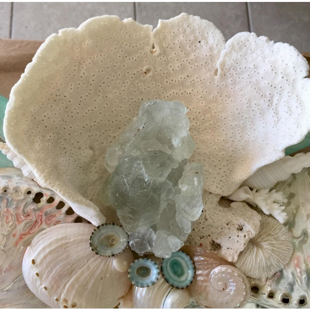 Truly an elegant Organic Baroque Seashell Mirror for any room in the house. Christa's South Seashells is famous for its...