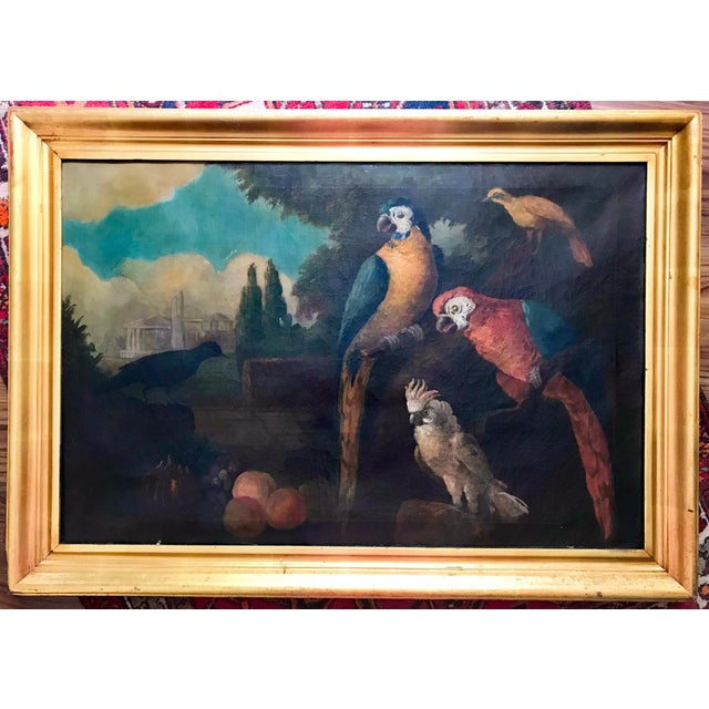 Jacob Bogdani Follower, Still Life With Parrots Oil on Canvas For Sale - Image 13 of 13