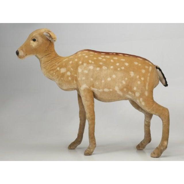 """1963 Steiff Mohair Fallow Deer """"Studio Animal"""" For Sale - Image 13 of 13"""