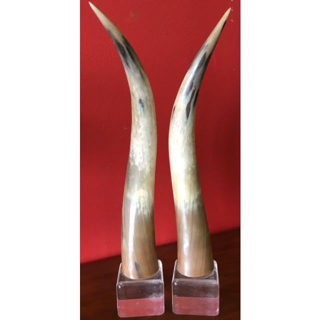 Texas Longhorns Cattle Horns on Lucite Bases - A Pair For Sale - Image 4 of 7