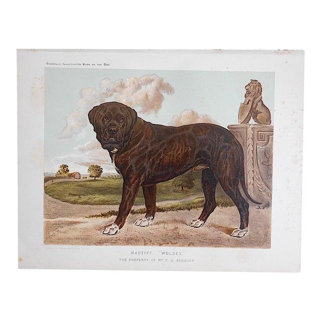 "Antique Dog Lithograph ""Mastiff"" - Image 1 of 3"