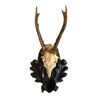 Mounted Black Forest Deer Antlers For Sale