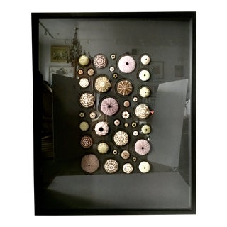 "Christopher Marley Original ""Urchin Mosaic"" Mounted & Framed Collage For Sale"