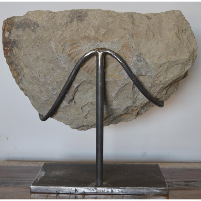 Fossilized Ammonite on Custom Iron Stand For Sale - Image 4 of 10