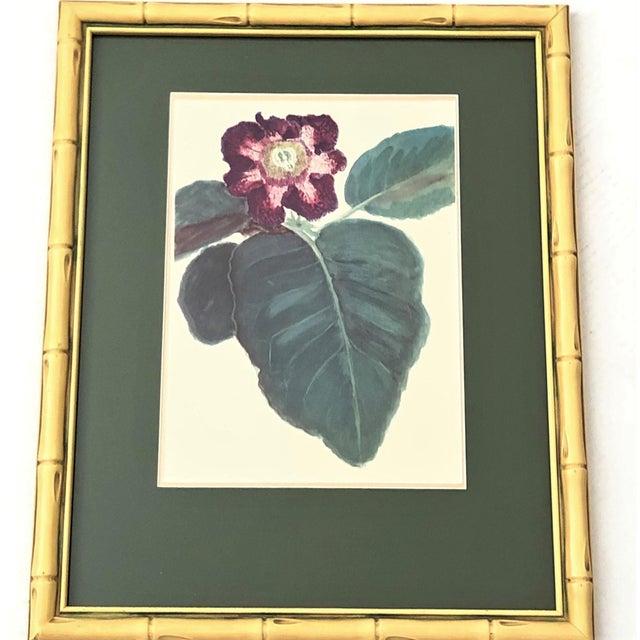Vintage Botanical Prints - Set of 4 For Sale - Image 4 of 6