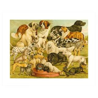 Antique 'Dog Breeds 2' Archival Print For Sale