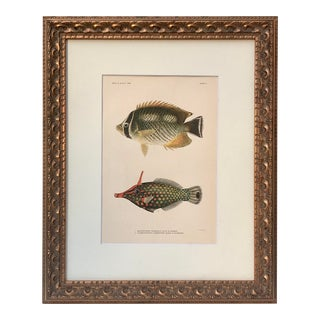 Antique Lithograph of Hawaiian Fish For Sale