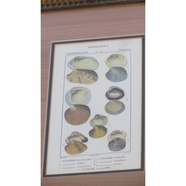 Pair of Vintage Latin Conch Shell Botanicals - Image 2 of 9